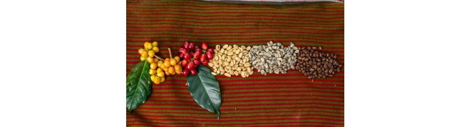 Nos cafés en grain bio fairtrade crueltyfree