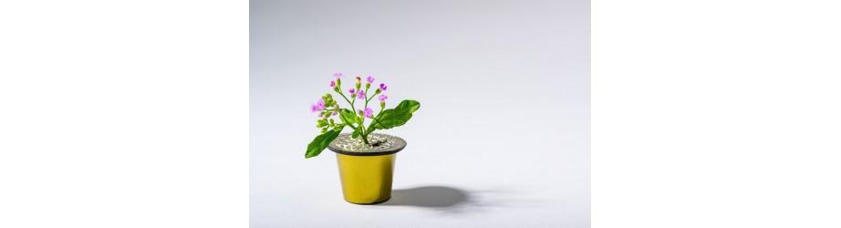 Nos cafés en capsules bio fairtrade crueltyfree